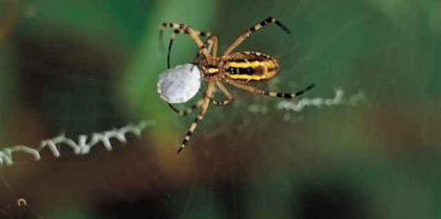 Spiders have taste receptors on their legs.