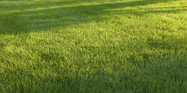 In the United States, over 25 million acres of lawn are maintained.