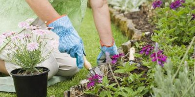 Adopt good care habits in the garden to enjoy a crabgrass-free space.