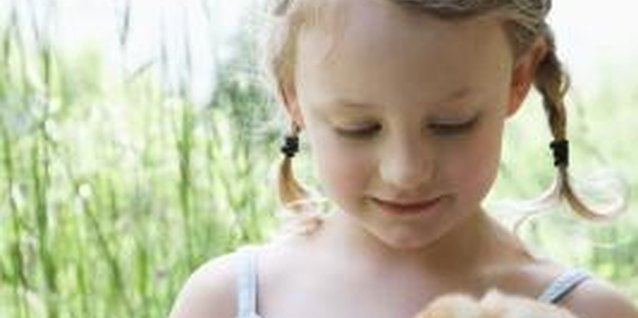 Teach your child to care for and protect baby birds.