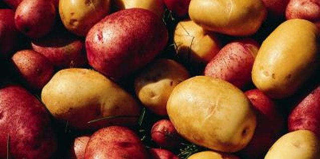 Potatoes (Solanum tuberosum) are cool-weather vegetables.