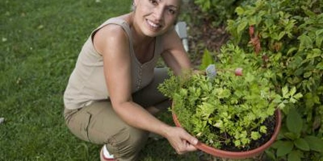 Spend some time each week clearing your herb garden of weeds.