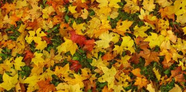 Using fall leaves to improve garden soil is a great organic choice.