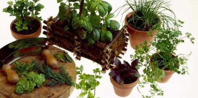 Plant a variety of different herbs or multiples of the same type for visual impact.