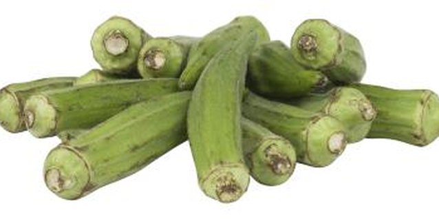 Okra is generally grown as a food crop, but it is also an attractive plant with showy blooms that resemble hibiscus flowers.