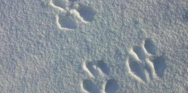 Who made these tracks? Your preschooler will have some wild guesses!