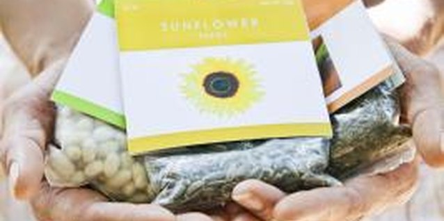 How to Collect Evening Stock Flower Seeds