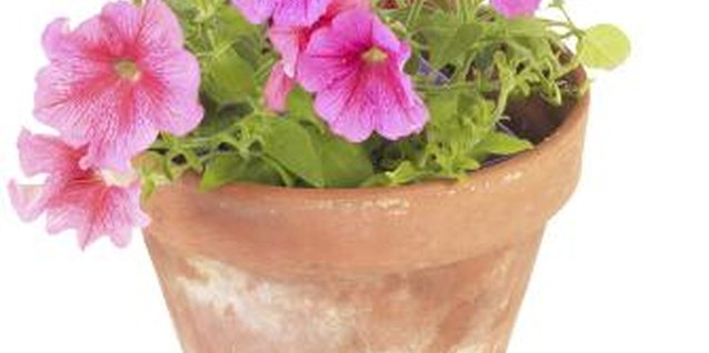 Use flowerpots that match or complement the colors of your home.