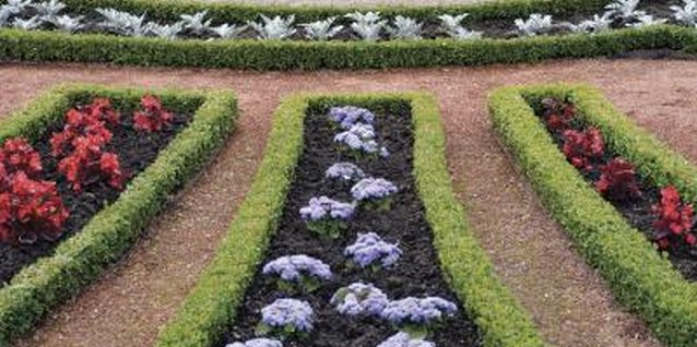 How to Transplant Old Boxwood Hedges