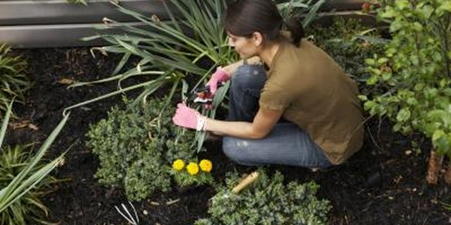 Mixed fertilizers provide essential nutrients to increase the health and size of garden plants.