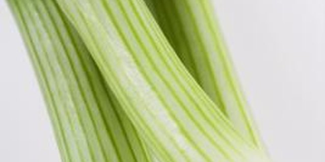 Common Pests for Green Onions
