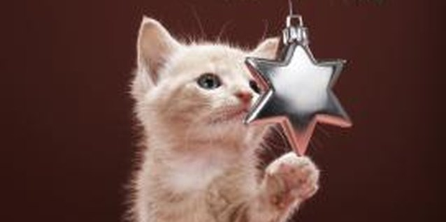 Dangling ornaments are irresistible to most curious kittens.