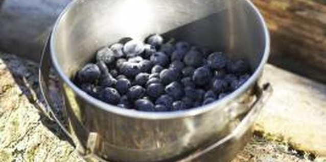 Move your blueberries to a shady spot when your bucket gets full.