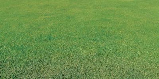 Ferrous sulfate treats lawns for moss.