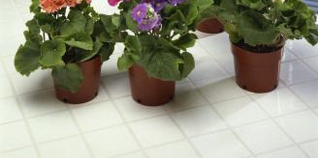 How to Transplant African Violets With Long Necks
