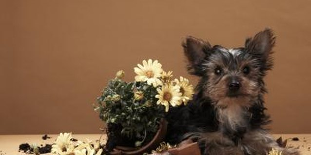 Creeping Plants That Are Safe for Dogs