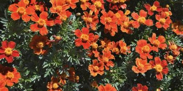 Choose a variety of compact shrubs for year-round color.