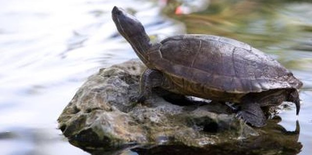 Watching turtles in nature is a child-friendly activity.