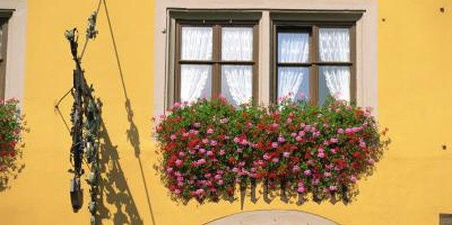Some flowers for window boxes cascade over the side to conceal the container.