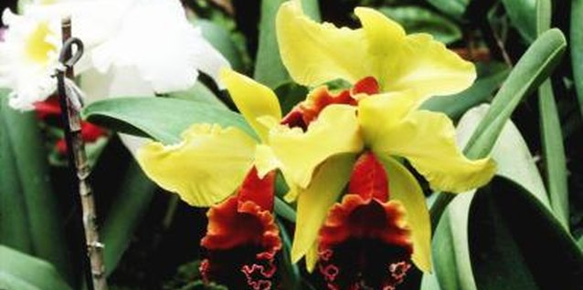 Bold, exotic flowers characterize tropical gardens.