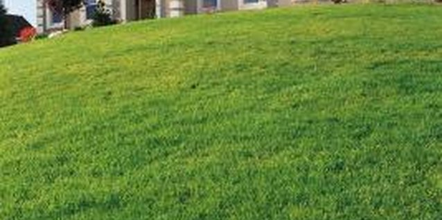 Sloping lawns require consistent watering from top to bottom.