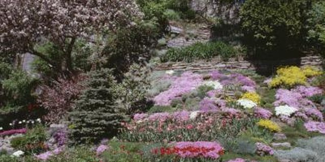 Two or three complementary flower colors give hill landscaping consistency.