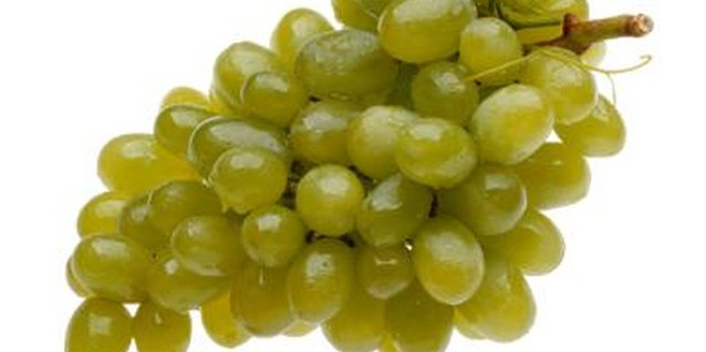 Seedless grape (Vitis vinifera) varieties grow in U.S. Department of Agriculture plant hardiness zones 4 though 9, depending on the cultivar.