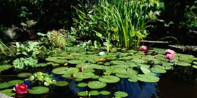 How to Plant Water Plants in Plastic Ponds