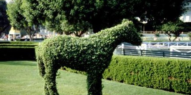 Topiary pets take less feeding than their animal counterparts.