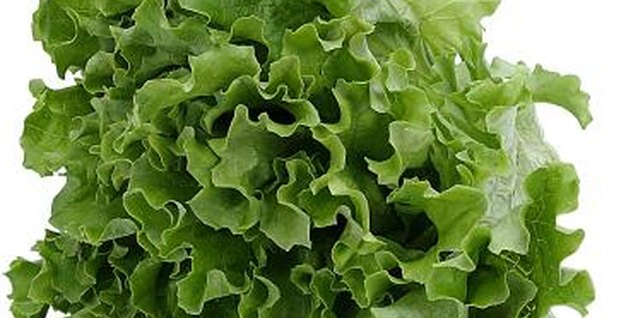 Hydroponics is ideal for lettuce.