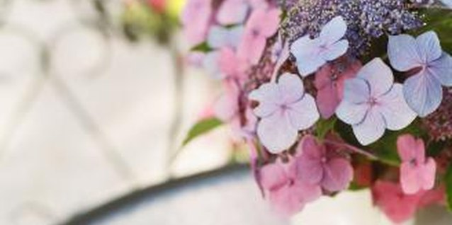 How to Decorate a Table With Hydrangeas