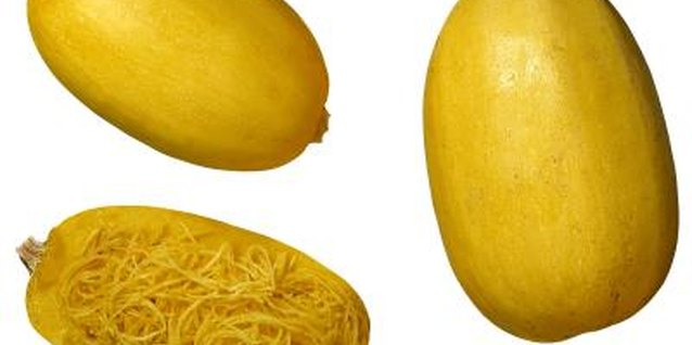 What Does an Immature Spaghetti Squash Look Like?