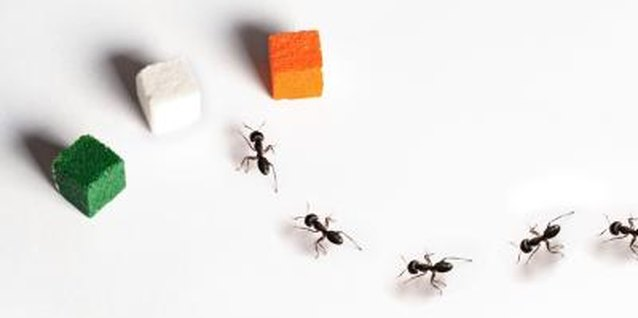Borax & Icing Sugar as an Ant Killer