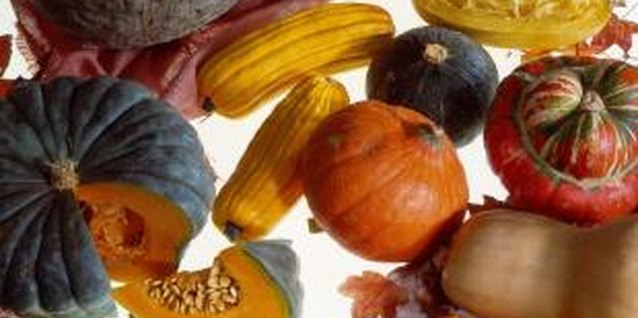 Vintage Varieties of Hubbard Type Squash