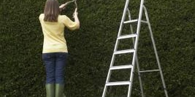 How to Trim a Pyracantha Shrub