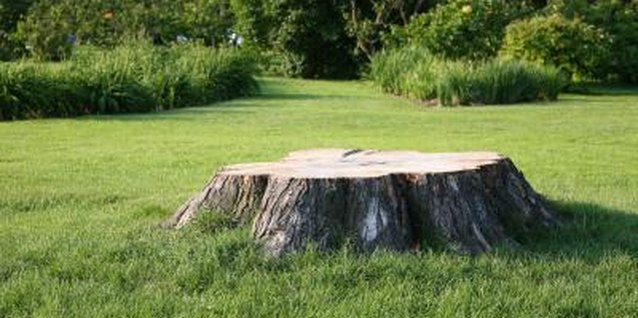 What Can You Do With a Tree Stump?