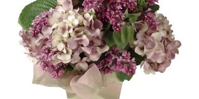 How to Get Potted Hydrangeas to Rebloom