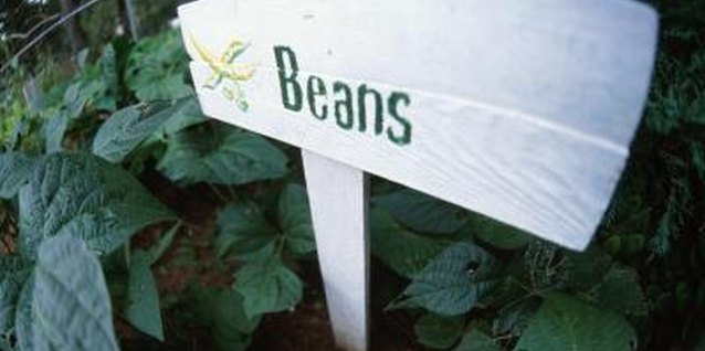 Bush beans don't require a lot of space to grow productive plants.