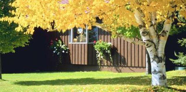 Protect trees in your yard with sticky barriers.