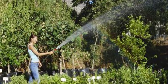 No matter how much water a drip system uses, it's less than spraying with a hose.