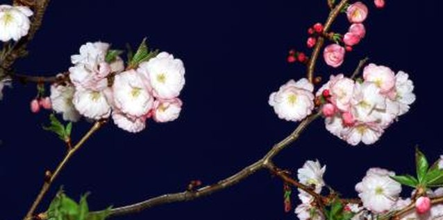 Some flowering trees, such as the crabapple, also add fragrance to the garden.