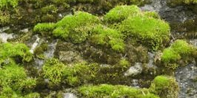 Gather moss growing in similar conditions for best results.