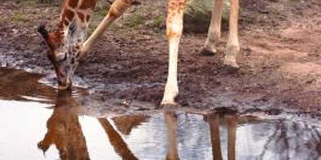 How to Paint Giraffe Prints