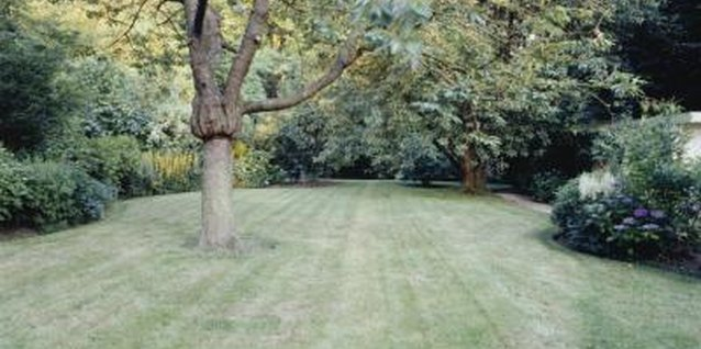 Should I Spray Around a Mature Tree to Kill Grass & Weeds?
