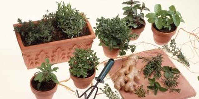 Bury a planter in the ground when planting mint among other herbs.