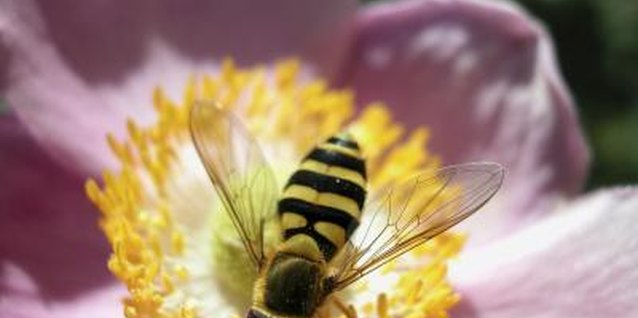 Toddler Lesson Plans on Bees