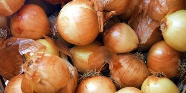 Varieties of Large Onions
