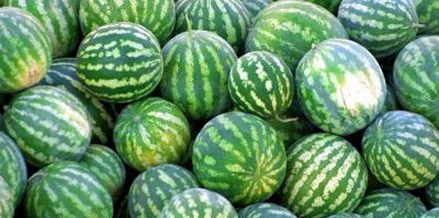 How to Tell the Difference Between Watermelon & Cucumber Plants