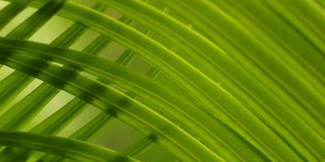 How to Kill Mites on an Indoor Palm Tree