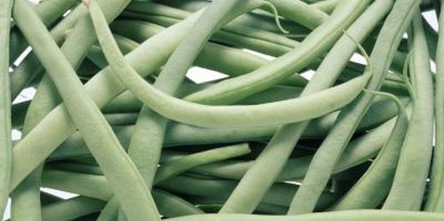 A tender, warm-weather vegetable, green bean foliage is susceptible to fungal infection.